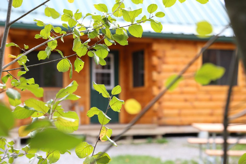 green leaves in the foreground, with a wooden cabin in the blurred background