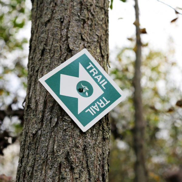 trail sign hangin on a tree in the forest