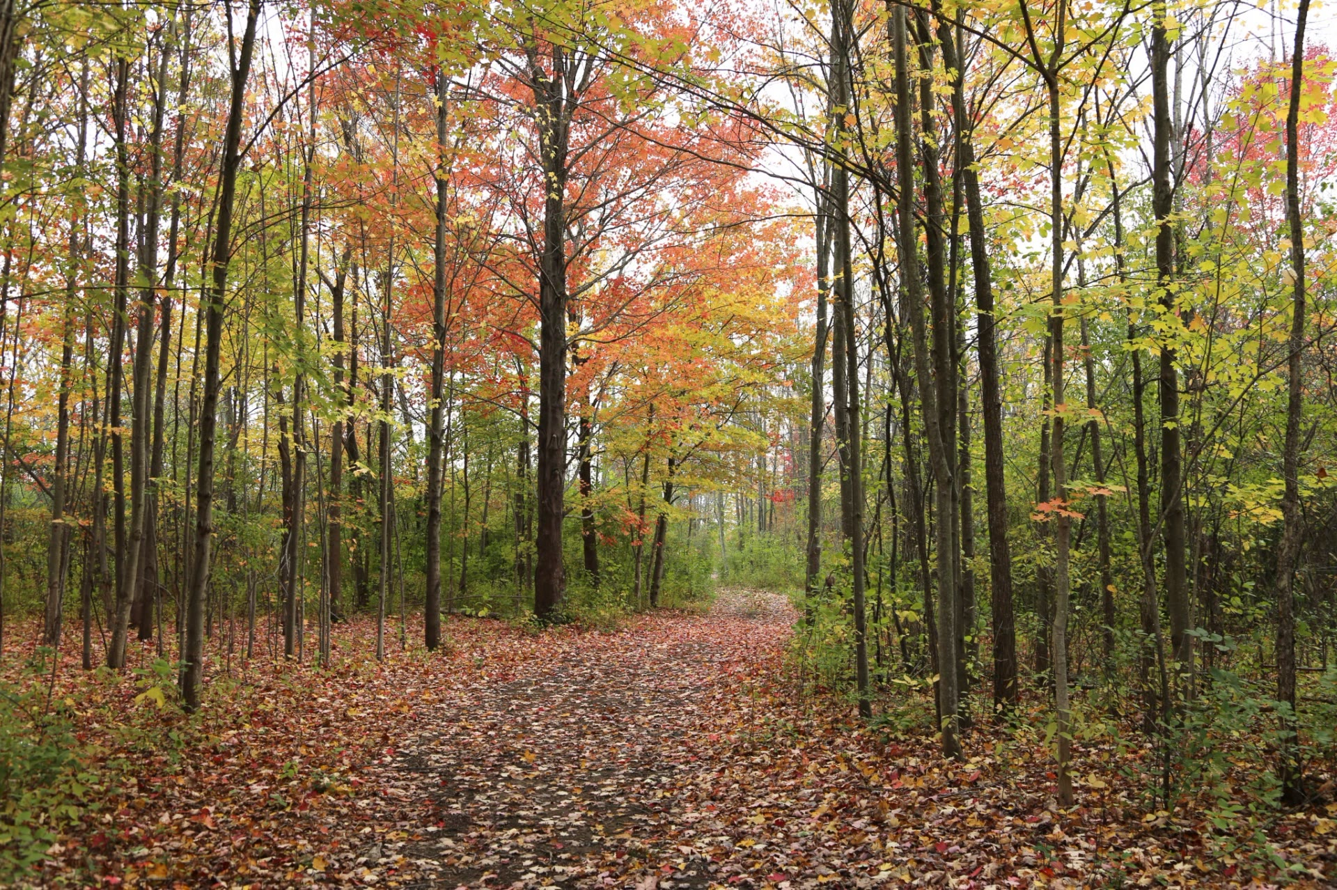 walking trail in the woods in autumn colors